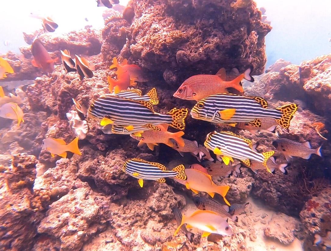 Ellaidhoo Maldives coral reef